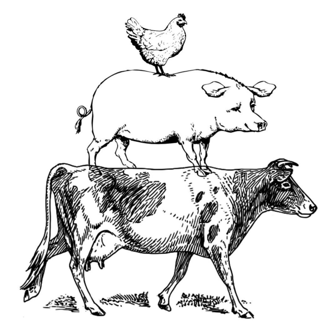Cherry Grove: The Yohe Family Farm